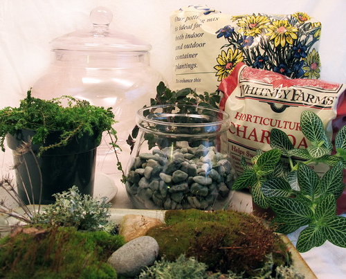 terrarium-supplies