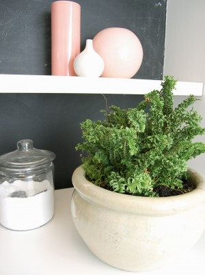 plants around the house easy houseplants