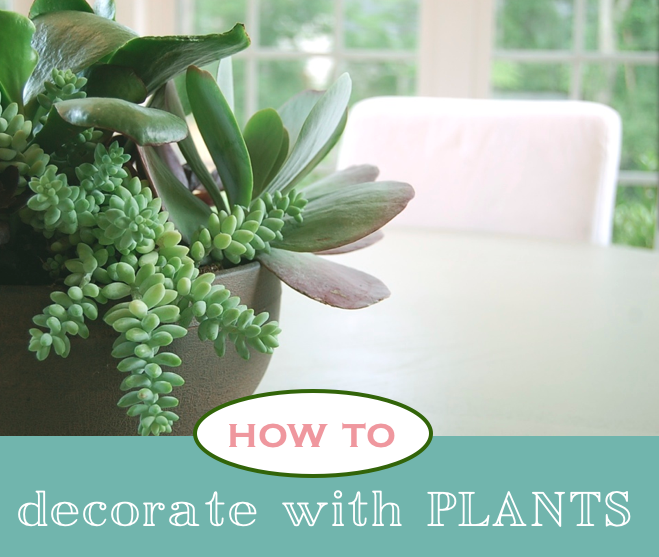 How to decorate with plants houseplants house plants - Decorate home with plants ...