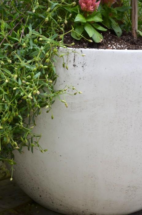 planter beore